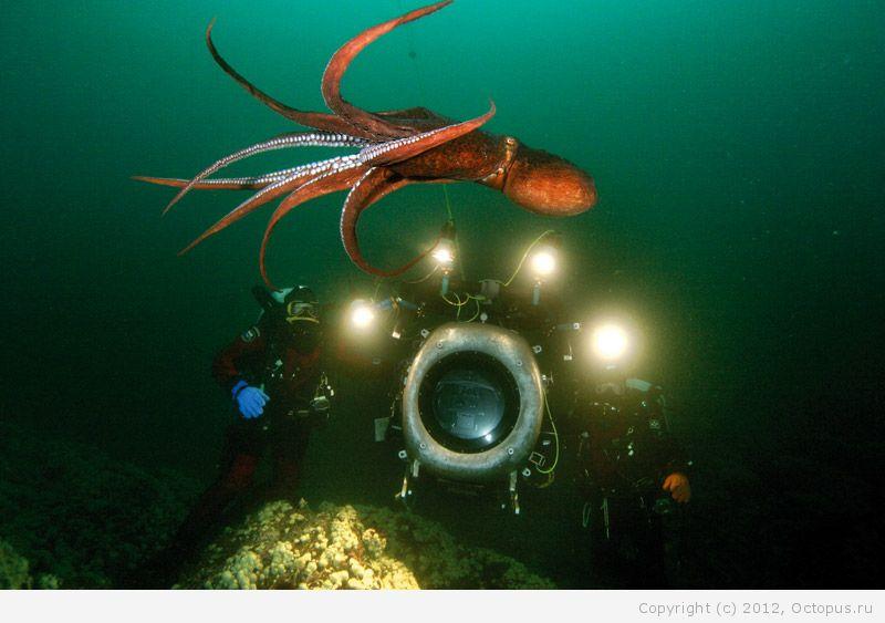 система осьминог подводная лодка