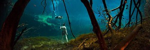 Подводный осенний лес в Фото недели