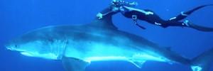 На Гавайях девушка прокатилась на смертельно опасной для людей белой акуле