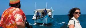 Дайв-бизнес по-мальдивски, или Оборотная сторона нырялки