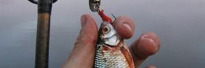 Бесплатное любительское рыболовство интенсивными способами лова