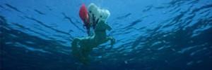 Популяция морских коньков на Кипре