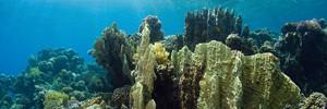 Кораллы и рифы