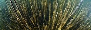 Валдай. В поисках реликтовых водорослей...