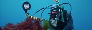 Выбор подводной фотокамеры (часть 3). Амфибийные компакты.