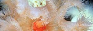 Коралловое царство