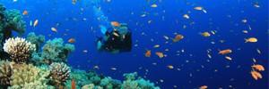 Тасмания манит подводными пещерами, лесами и затонувшими кораблями