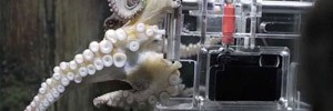 В океанариуме Окленда осьминога научили фотографировать