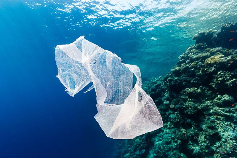 Дайверы со всего мира приедут в Хургаду чистить дно Красного моря