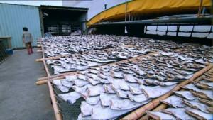 Фильм-расследование «Shark Bait» о продаже супа из акульих плавников
