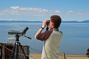 В акватории Охотского моря биологи продолжат исследовать распространение и сезонные миграции белух