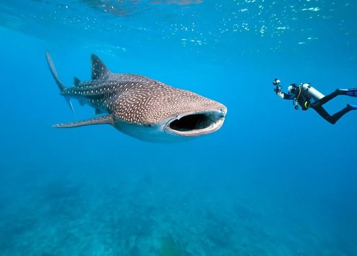 Дайвинг с акулами - лучшие места. Исла Мухерес, Канкун, Мексика.