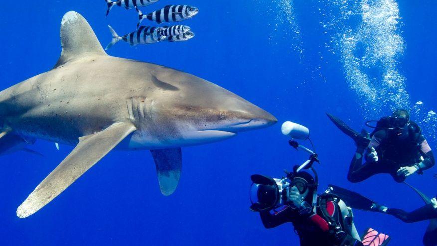 Дайвинг с акулами - лучшие места. Кэт-Айленд, Багамы.
