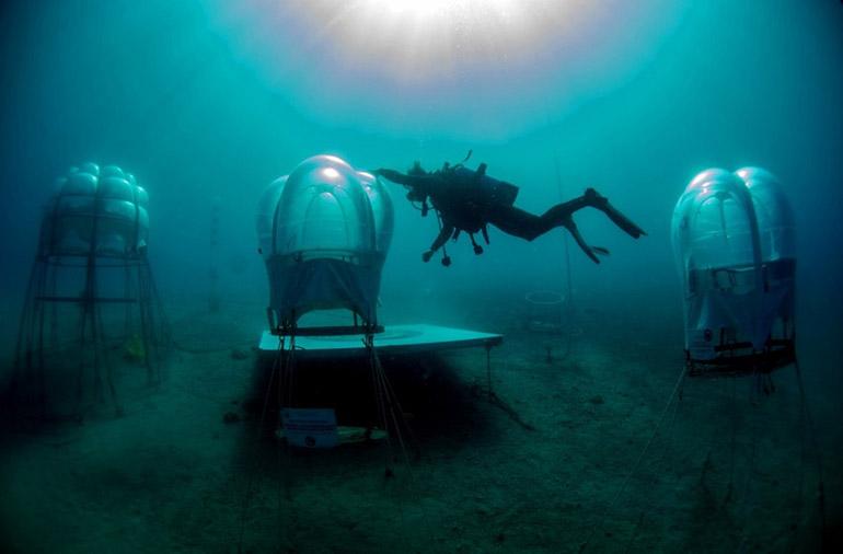 В Италии появился подводный огород
