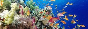 Обследование кораллов будет проходить с высоты