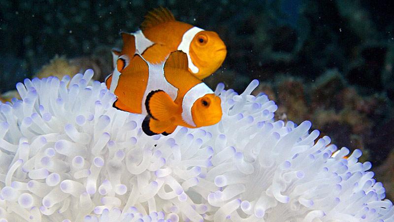 На Горбушке открыт Центр «Коралловый риф»