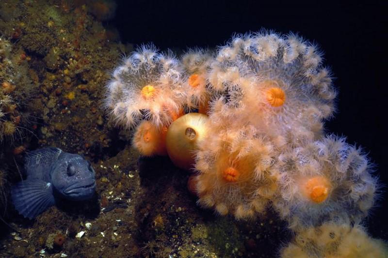 На Арбате состоится флешмоб в поддержку выставки подводного фото