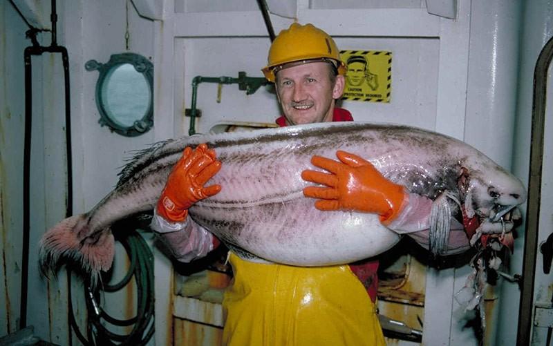 У берегов Аляски найдена редкая рыба