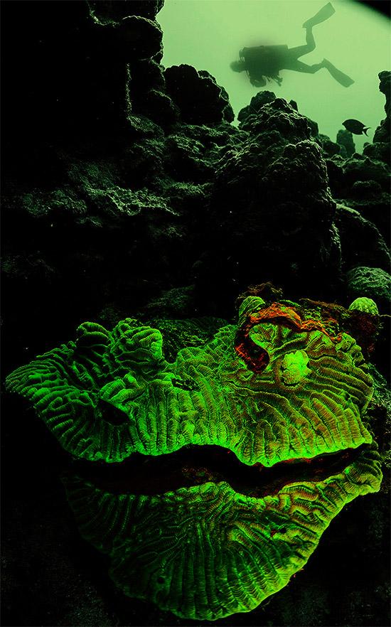 Флуоресценция. Новые краски ночного дайвинга