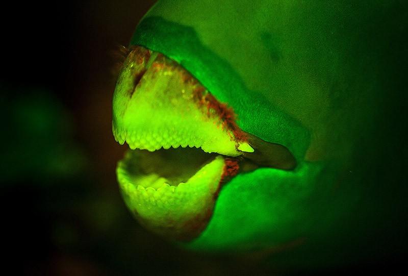 """А эта """"улыбка"""" попугая сделана с полным комплектом фильтров."""