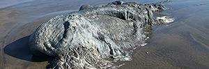 На берегу Мексики найден неопознанный монстр