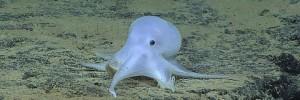 Каспер - неизвестный обитатель Тихого океана