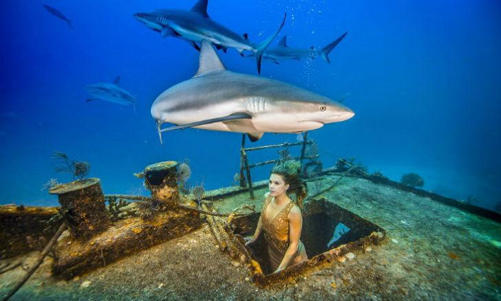Фотосесcия в защиту акул