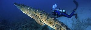 Под воду с крокодилами