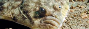 Родина осьминогов