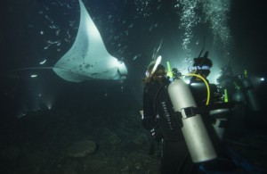 emily-hawaii-rays-night-dive-1024x667