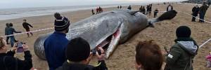 киты самоубийцы