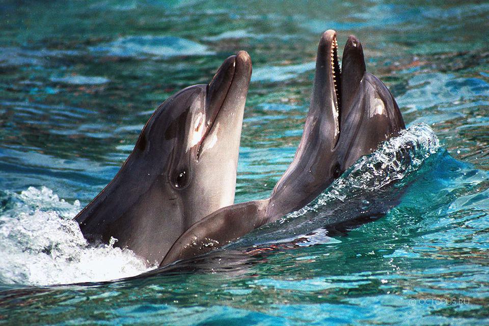 Благодаря «Роснефти» ученые смогут возобновить исследования черноморских дельфинов
